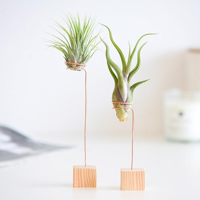 luchtplantjes brievenbus groen relatiegeschenk idee